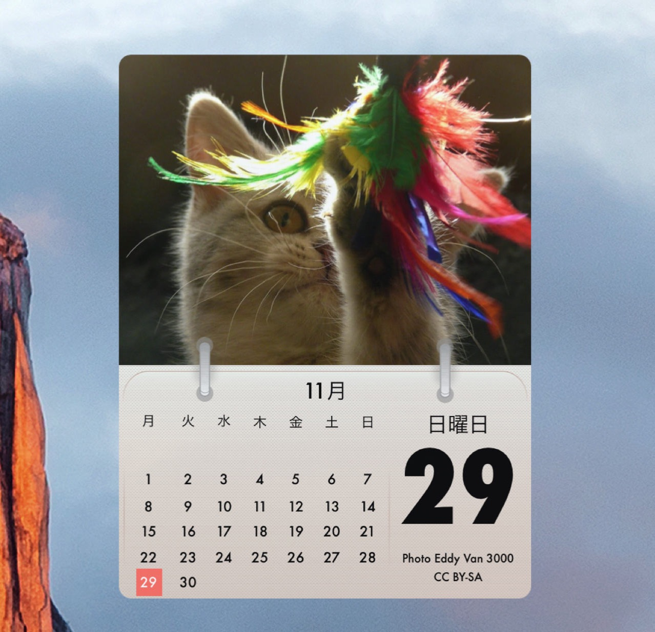 Cal cat1